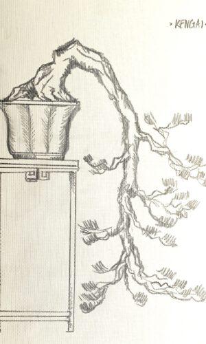"""Bonsai-Stil """"Kaskade"""" Kengai"""